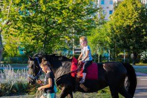 Lesenacht mit Pferd (2)