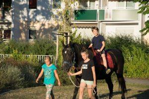 Lesenacht mit Pferd (3)